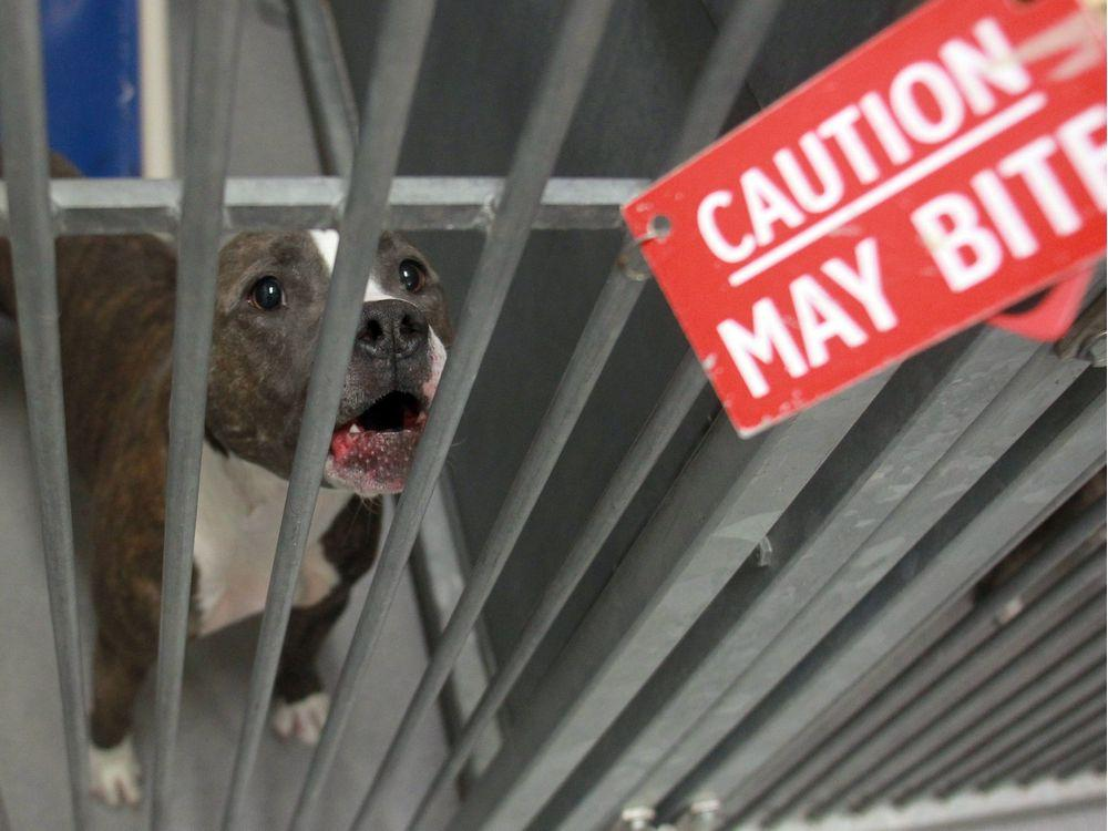 pitbulls should not be banned