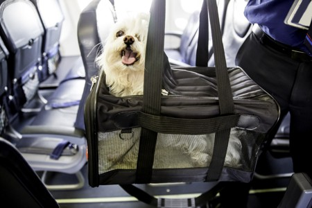 How to Travel Safely With Pets