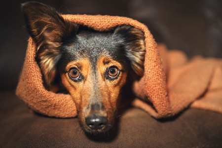 Do You Have a Stressed Dog? Let's Talk Stress in Dogs