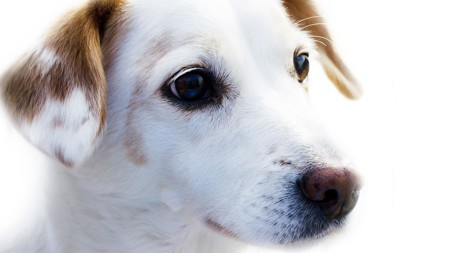 Genetic Testing Reveals Shelters Often Label Dogs With the Wrong Breeds