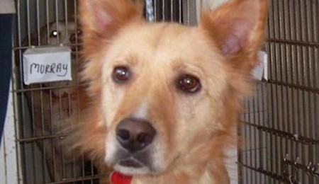 Shelter Dog Gets Back to Full Health with New Family