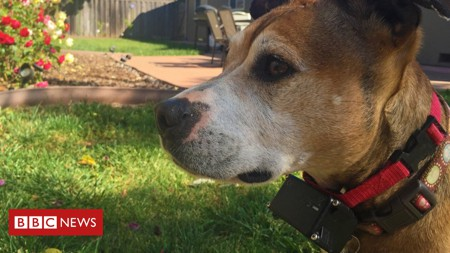 Ban on electric shock collars for pets