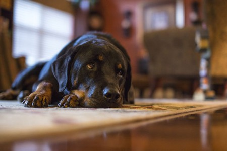 Well-Behaved Dogs May Have Happier Owners