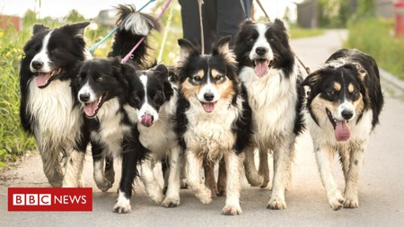 New insight into history of dogs and humans