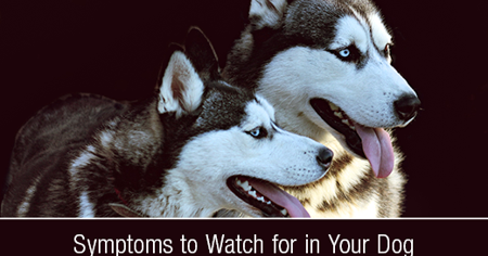 Symptoms to Watch for in Your Dog: Seizures/Convulsions