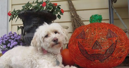 The Health Benefits of Adding Pumpkin to your Dog's Diet