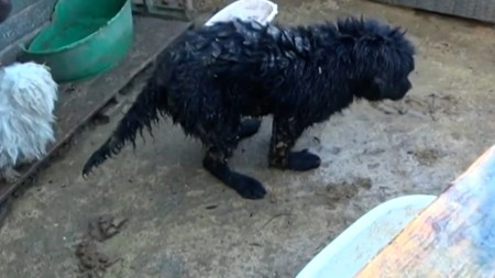 Man given ban over 'disgusting' puppy farm