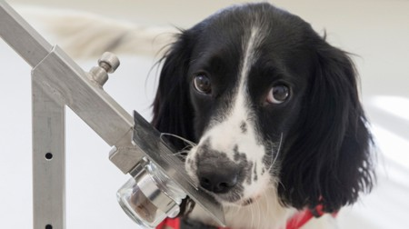 How A Dog Could Stop The Global Spread Of Malaria