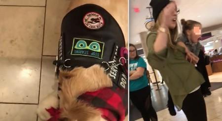 Mother Outraged At Service Dog Handler After She Refuses To Let Daughter Pet Dog