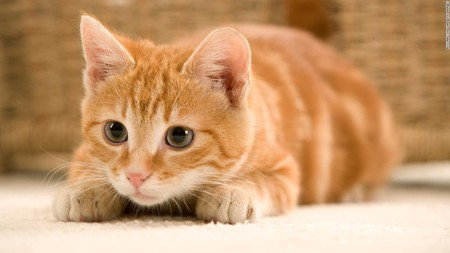 Merkley bill would stop USDA from euthanizing kittens