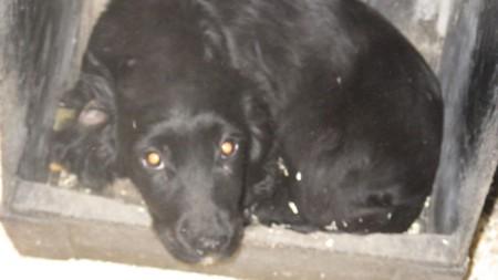 Skipton dog dealer sentenced after puppies kept in pig pens die from deadly virus