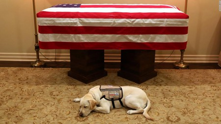 Sully the service dog to accompany Bush one last time